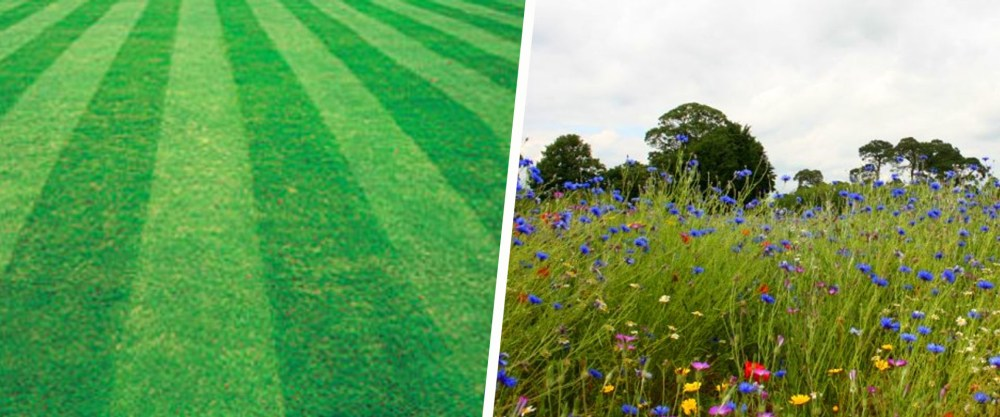 Bye Bye Grass: hoe luiheid het klimaat kan helpen redden
