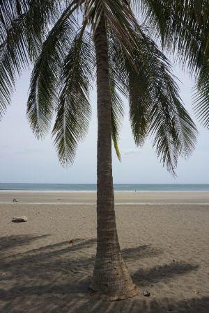 Palmtree Playa Venao