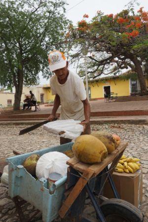 Kokosnoot in Trinidad