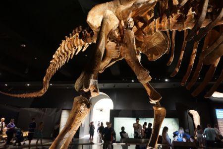 Titanosaur other view