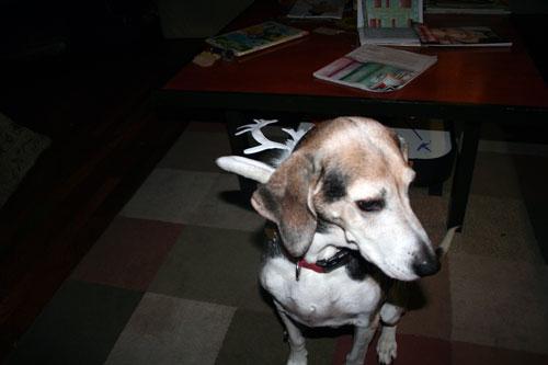 My dog Bennie