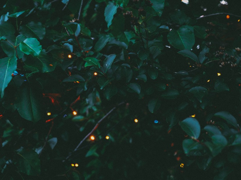 lights at waterfront sessions, spruce street harbor park, philly | brunch at audrey's
