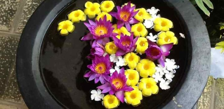 corolle di fiori in un bacile