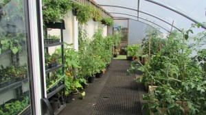 People grow food at the greenhouse, part of the community garden at The Brunny.