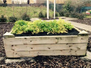 The raised beds at Oriel Road Train Station are used to grow free food.