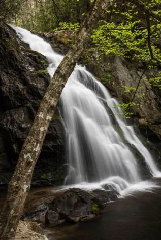 Waterfall and Tree