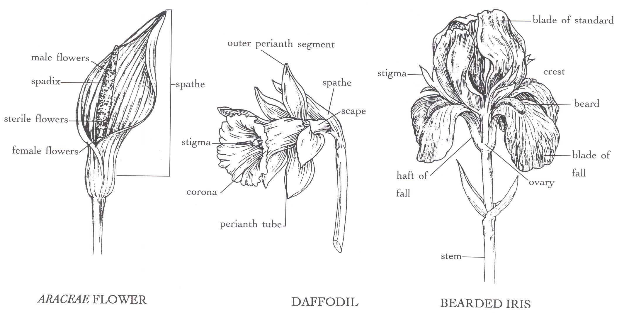 Diagram Part Flower Structure