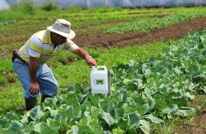 Beneficios laborales – Sector Agrario