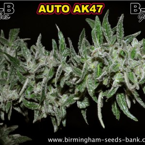 b-s-b auto ak47 bud poster