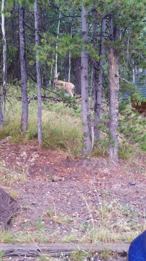 The deer outside agrees with me.