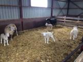 foto 3 boerderij
