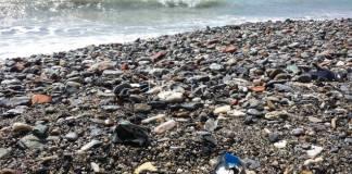 Una spiaggia in cerca di pulizie...