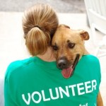 Volontari per la tutela degli animali