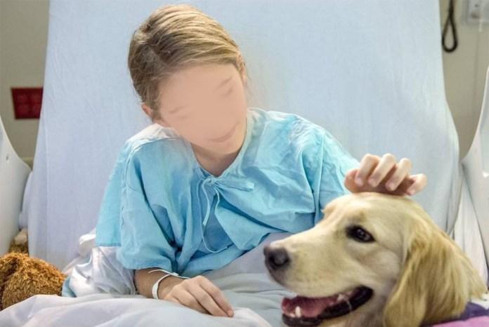 Via libera della Regione all'ingresso di cani e gatti negli ospedali, anche a Brescia