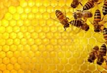 Produzione di miele in calo - www.bsnews.it