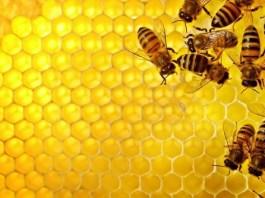 Sempre più fornitori per miele e propoli - www.bsnews.it
