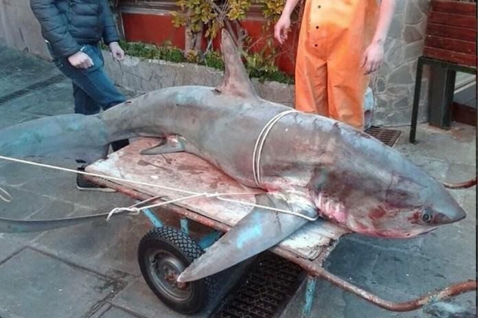 La foto del pescione d'aprile pescato nel Garda