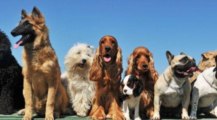 Sfilata canina