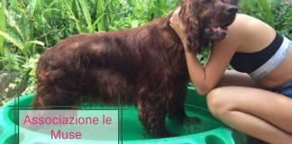 Uno dei cani dati in affidamento dal canile Le Muse di Rezzato, foto da Facebook