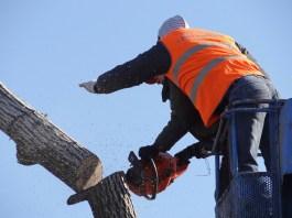L'abbattimento di un albero, foto generica da Pixabay