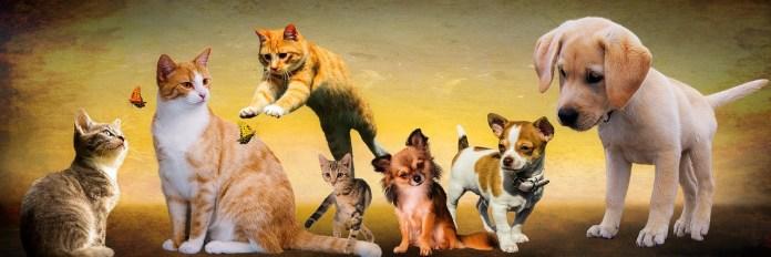 Animali, foto da Pixabay