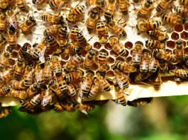 api - foto generica
