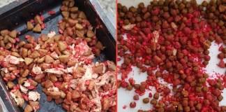 Cibo per gatti mescolato ad una sostanza rossa
