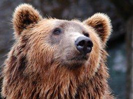 orso - foto generica da Pixabay