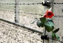 La Giornata della Memoria si celebra ogni anno il 27 gennaio
