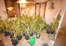La serra di marijuana scoperta dalla Polizia - foto questura di Brescia