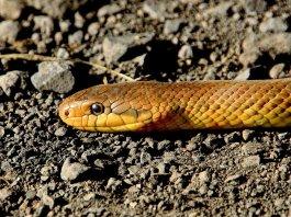serpente - foto generica - Foto di Alois Wonaschütz da Pixabay