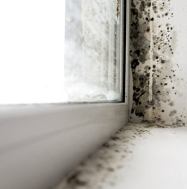 picture of a moldy window sill for mold restoration company in medina ohio