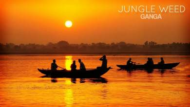 Photo of Jungle Weed – Ganga