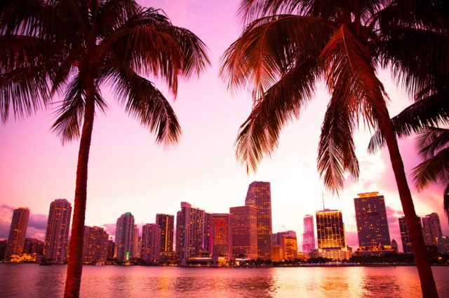 Miami Bitcoin Palmen