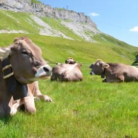 Schweizer Berghilfe hilft bei Wasserknappheit auf den Alpen
