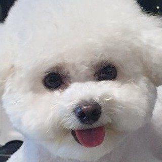 gfriend シンビ instagram愛犬専用アカウント