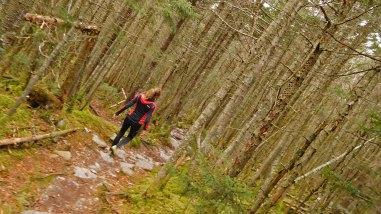Long Trail hiking Lincoln Gap to Mt Abraham-VT-USA