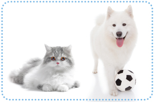 Dog grooming cat grooming bubbles pet spa a special anti shedding treatment that dramatically reduces the mess and clean up of unwanted pet hair solutioingenieria Gallery