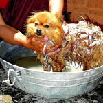 best dog soaps for dog bath
