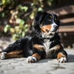 Important Summertime De-shedding Tips for Your Pet