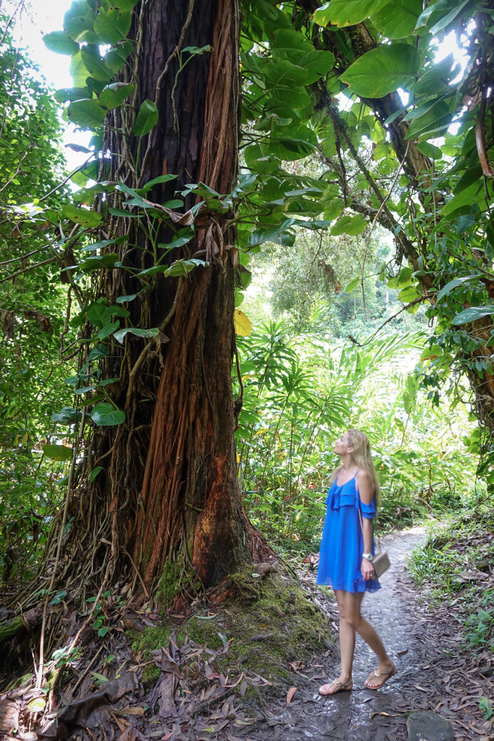 Waikamoi Ridge Trail | Driving the Road to Hana | Maui | Hawaii | Bubbly Moments