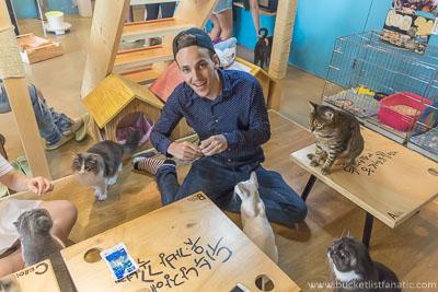 Cat Cafe - Bucket List