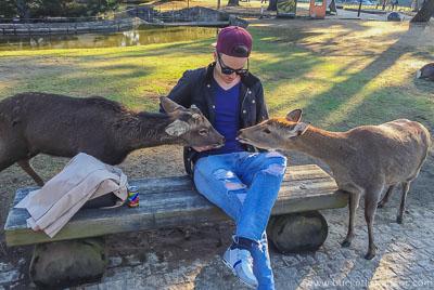 Deer - Bucket List