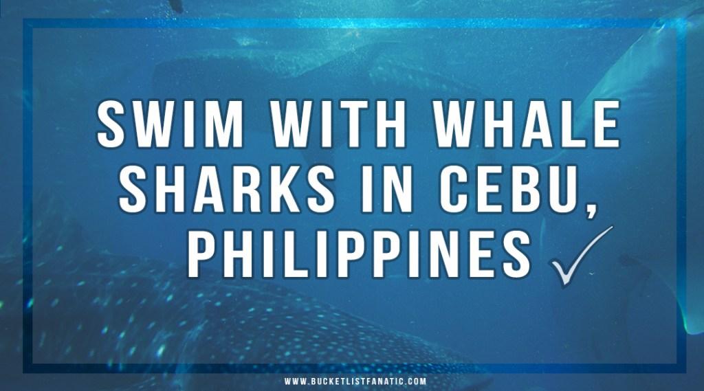 Swim with Whale Sharks in Cebu, Philippines - Bucket List Fanatic