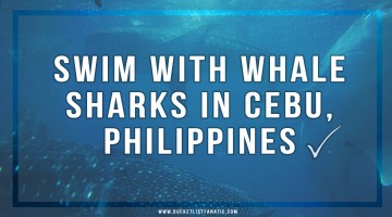Swim with Whale Sharks in Cebu, Philippines ✓