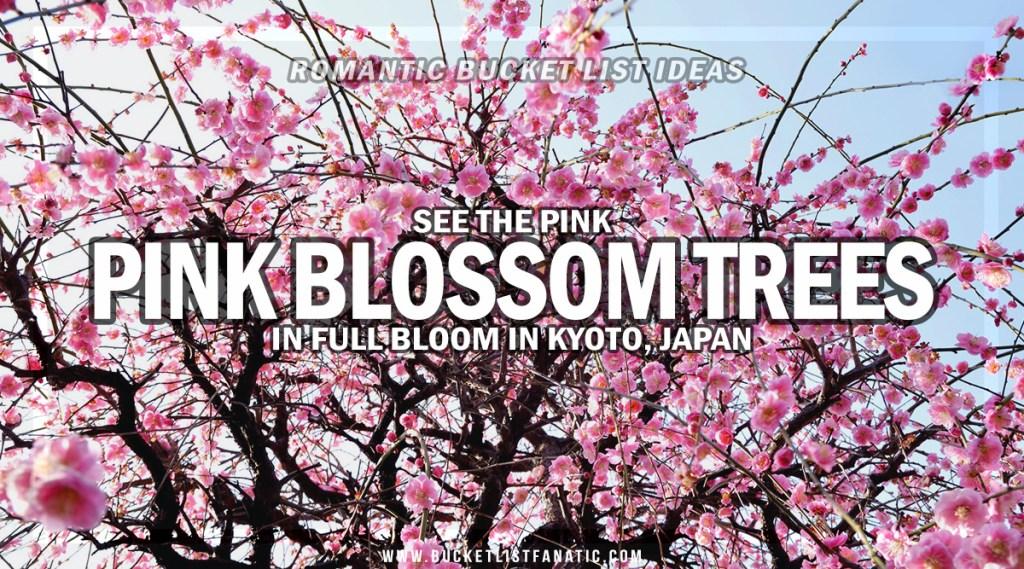 Pink blossom - Romantic Experiences Around the World