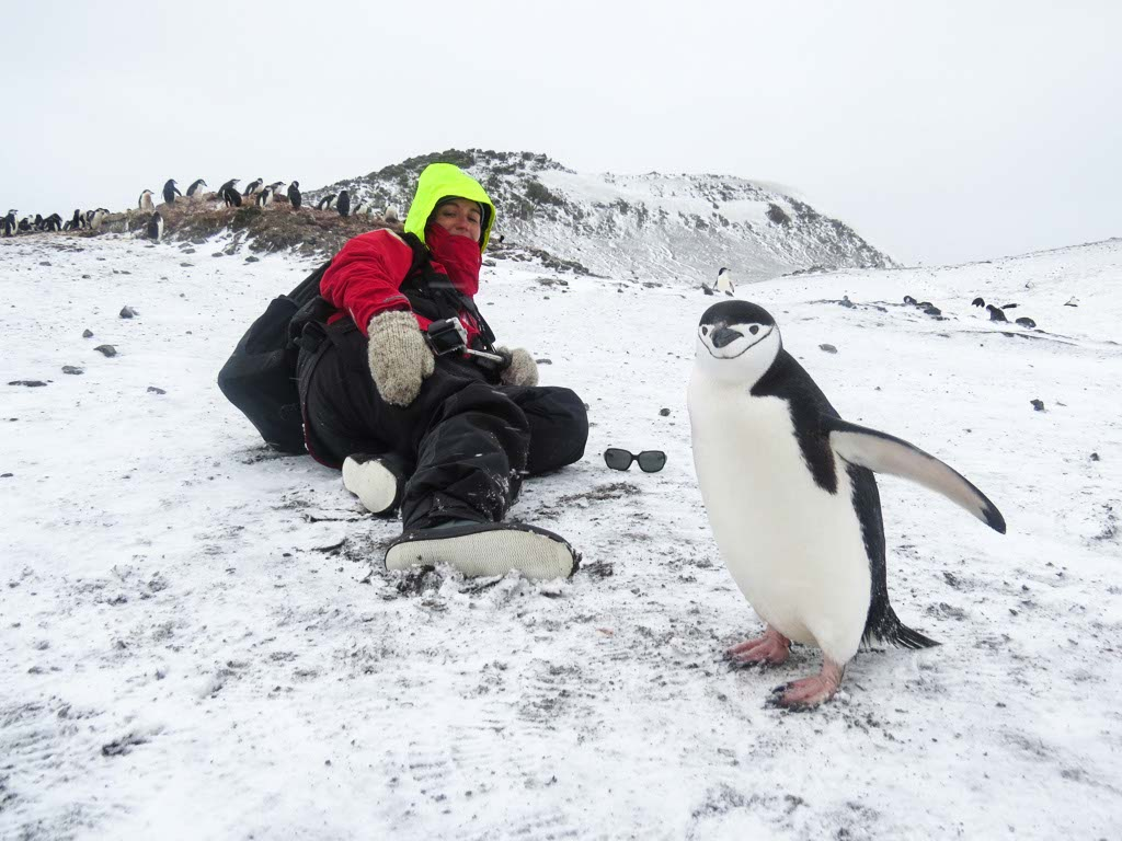 Penguin Selfie on Barrientos Island, Antarctica