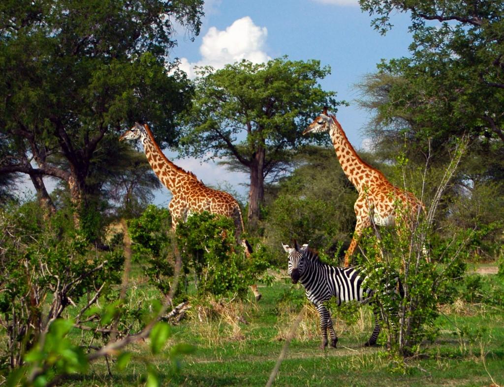 On Safari In Tanzania S Ruaha National Park