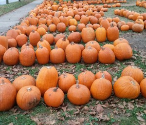Pumpkins for sale at Friendship United Methodist Church in Wyoming, Ohio (author's photo).