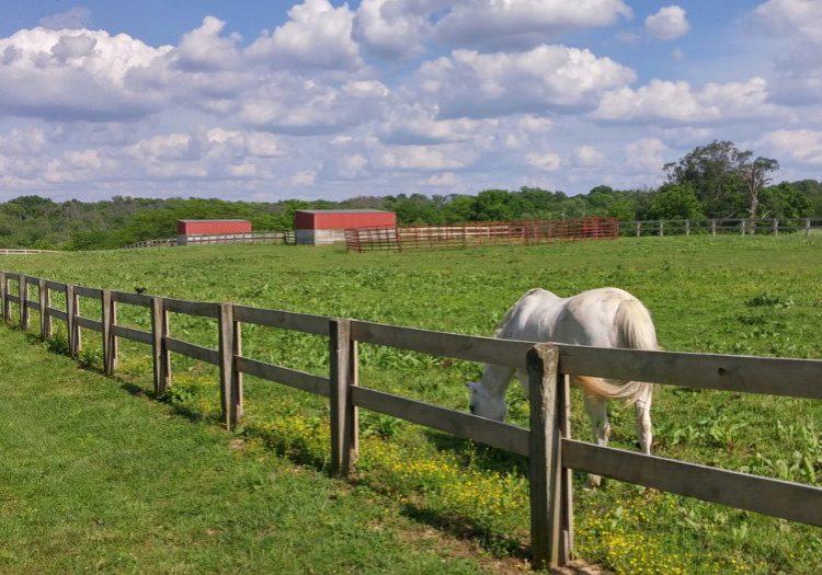 Parky's Farm in Winton Woods, Hamilton County, Ohio (author's photo).